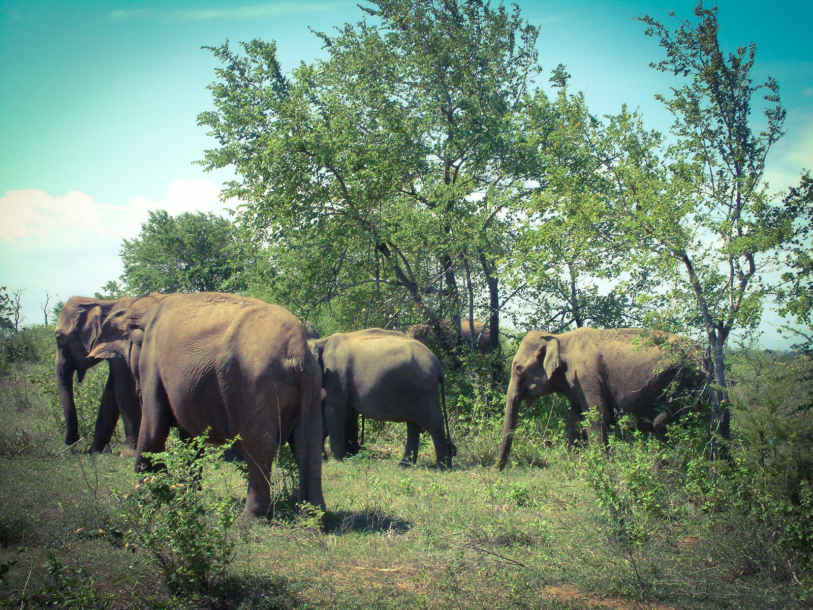 Elephants in Udawalawa National Park
