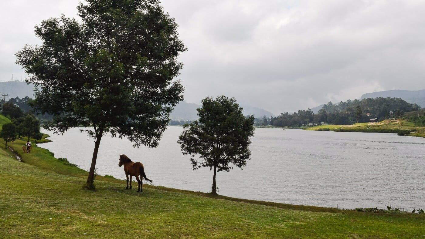 Gregory-Lake-Nuwara-Eliya-4